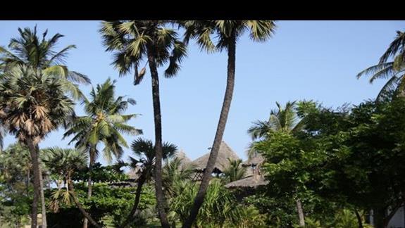 widok z ogrodu na domki prywatne