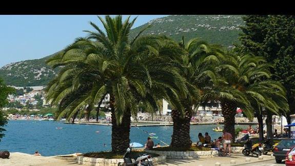 imponujące palmy