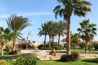 Hotel Coral Beach - Ogród