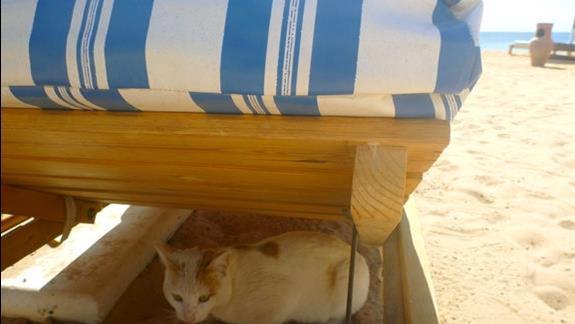 Po wszystkim zabawy z kotem Psotem bywalcem plazy a mieszkancem pobliskiego Diving Center