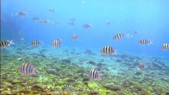 Ladne podwodne przyhotelowe widoki. Polecamy udac sie na granice wodna miedzy hotelem Hilton i Movenpick to tam znajduja sie najladniejsze czesci rafy.