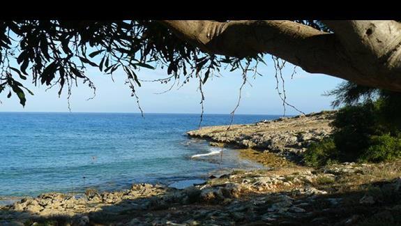 uroczy zagajnik w drodze na Nissi Beach wzdłuż wybżerza