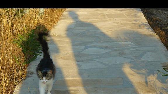 jeden z wielu kotków, który przechadza się nadbrzeżnym chodnikiem