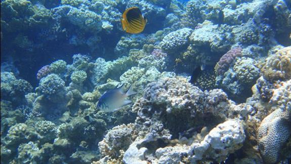 rafa w okolicach Blue Hole