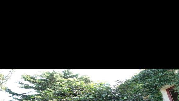 ... pomarańcze ...