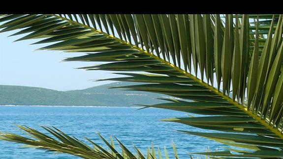 liście palmowe na tle morza