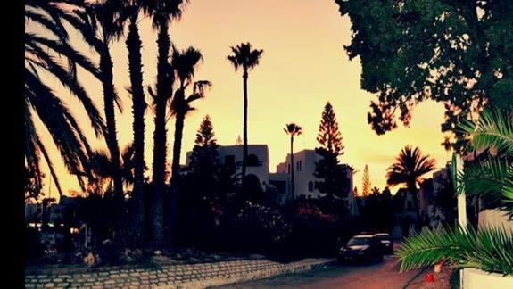 palmy i drzewa, czyli mieszanka klimatów