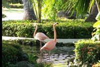 Hotel Grand Palladium Punta Cana Resort & Spa -