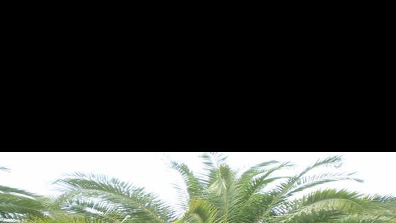 my w otoczeniu hotelowej roślinności:)