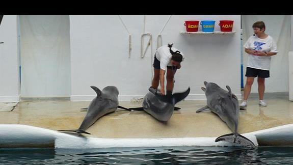 podopieczni delfianrum i ich opiekunki na pokazie