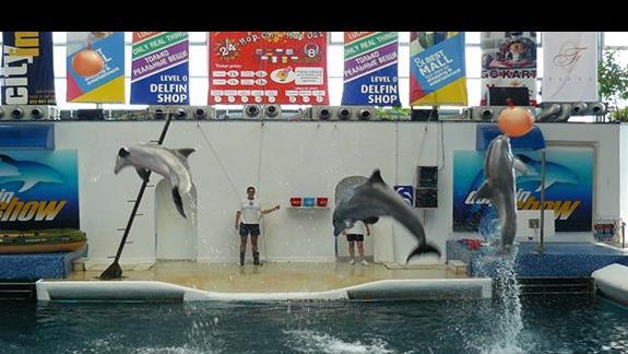 popisy delfinów