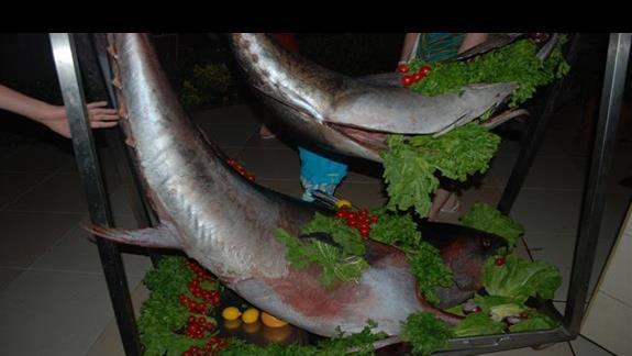 Mega tunczyk na kolacje:)