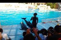 Hotel Otium Amphoras - Delfiny były  gwiazdami tamtego dnia:)