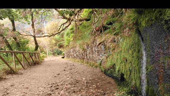 Atrakcje Madery: Górskie Levady, ścieżka na Rabacal