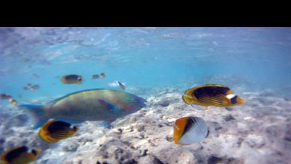 podwodny świat podczas przypływu