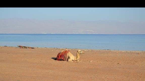 Plaża w Taba Heights