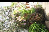 Hotel Allegro Isora - Okazy roślin na terenie hotelu.