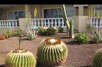 Hotel Allegro Isora - Okazy kaktusów pod naszymi oknami.