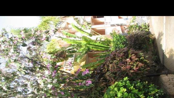 Okazy roślin na terenie hotelu.