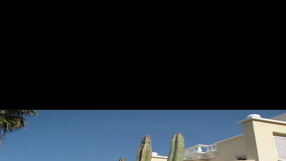 Okazy kaktusów pod naszymi oknami.