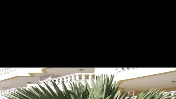 Ciekawy okaz palmy na terenie hotelu.