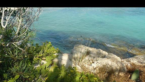 egzotyczna roslinność nad brzegiem morza