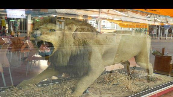 wypchany lew - atrakcja jednej z kanjpek