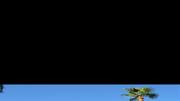 strzeliste plamy iinne drzewa na dziedzincu monastyru