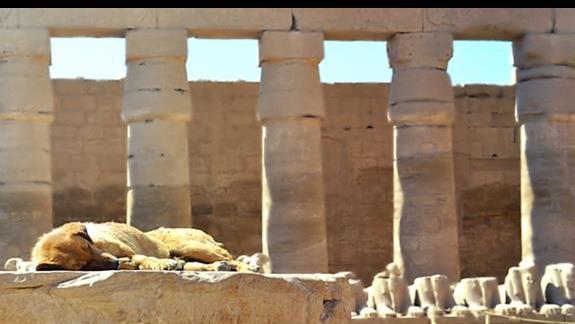 wycieczka fakultatywna do Luxoru
