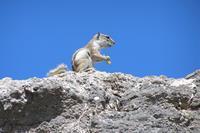 Hotel SBH Monica Beach - Na skałach koło hotelu żyją takie sympatyczne wiewiórki.
