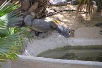 Hotel SBH Monica Beach - Wyspy kanaryjskie bez kanarków? Tego sfotografowałem w Oasis parku.
