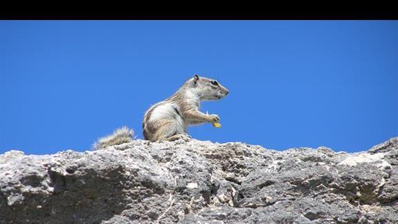 Na skałach koło hotelu żyją takie sympatyczne wiewiórki.