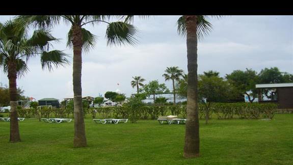 Zielen przy plazy