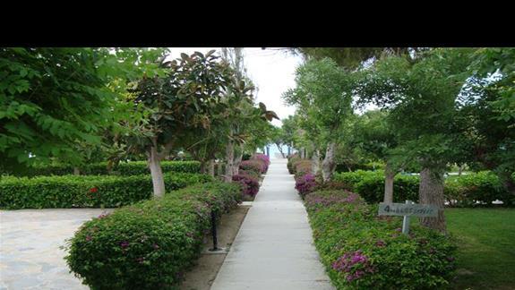 Ogród w hotelu Ocean Blue