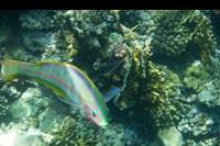 Marsa Alam - Świat podwodny