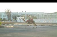 "Hotel Otium Golden - EGIPSKIE ""TAXI"" :)"