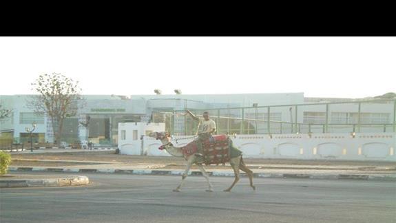 "EGIPSKIE ""TAXI"" :)"