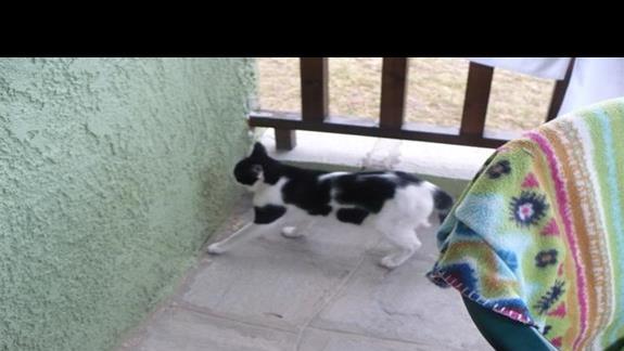 koty wszedzie na balkonach gosci w barze piaskownicy dla dzieci pozdrawiamy alergików