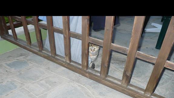 kot na balkonie sasiadów miedzy ich rzeczami, dobrze ze nie maja alergi
