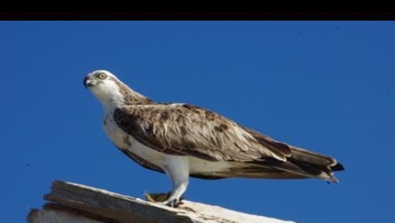 Ptak polujacy w poblizu rafy