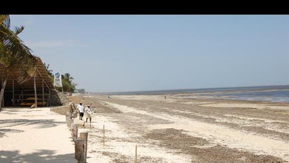 glony na plazy