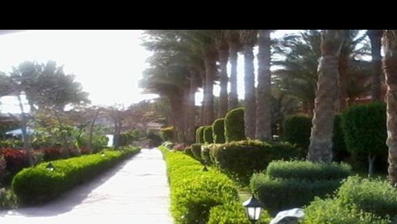 Palmowa promenada prowadząca do pokoi - Grand Plaza