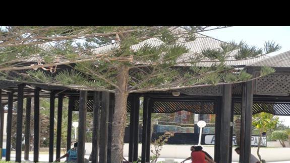 Amir Palace - zajęcia jogi