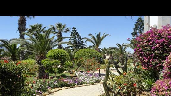 Eden Club - ogród