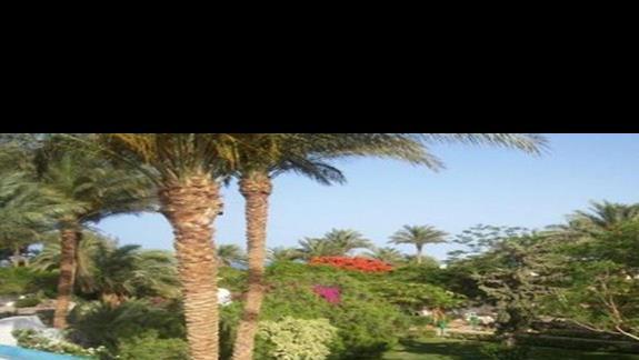 Piekny kolorowy ogród