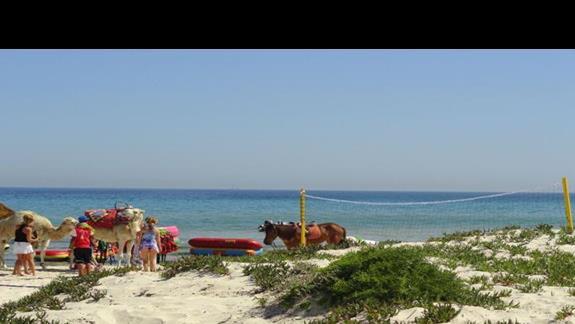 One Resort Monastir - atrakcje na plaży