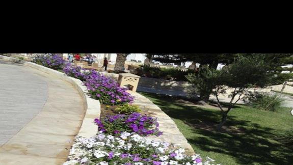 Riu Imperial Marhaba - kwiaty przy drodze na plażę