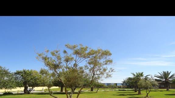 Riu Imperial Marhaba - ogród przy plaży