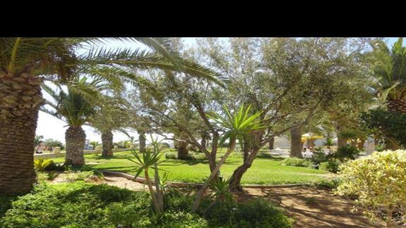 Riu Imperial Marhaba - ogród