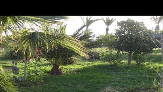 Skanes Serail - ogród